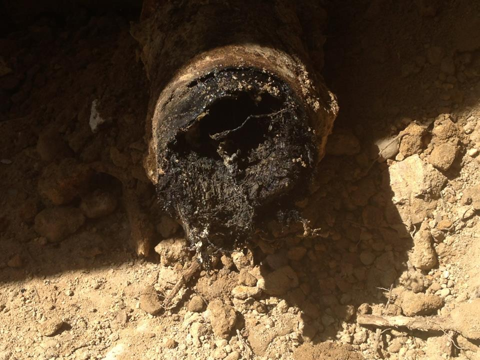 Tree Root Infiltration in Pipe